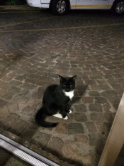 One of many stray cats we met on our travels. This one had adopted the Guest House.
